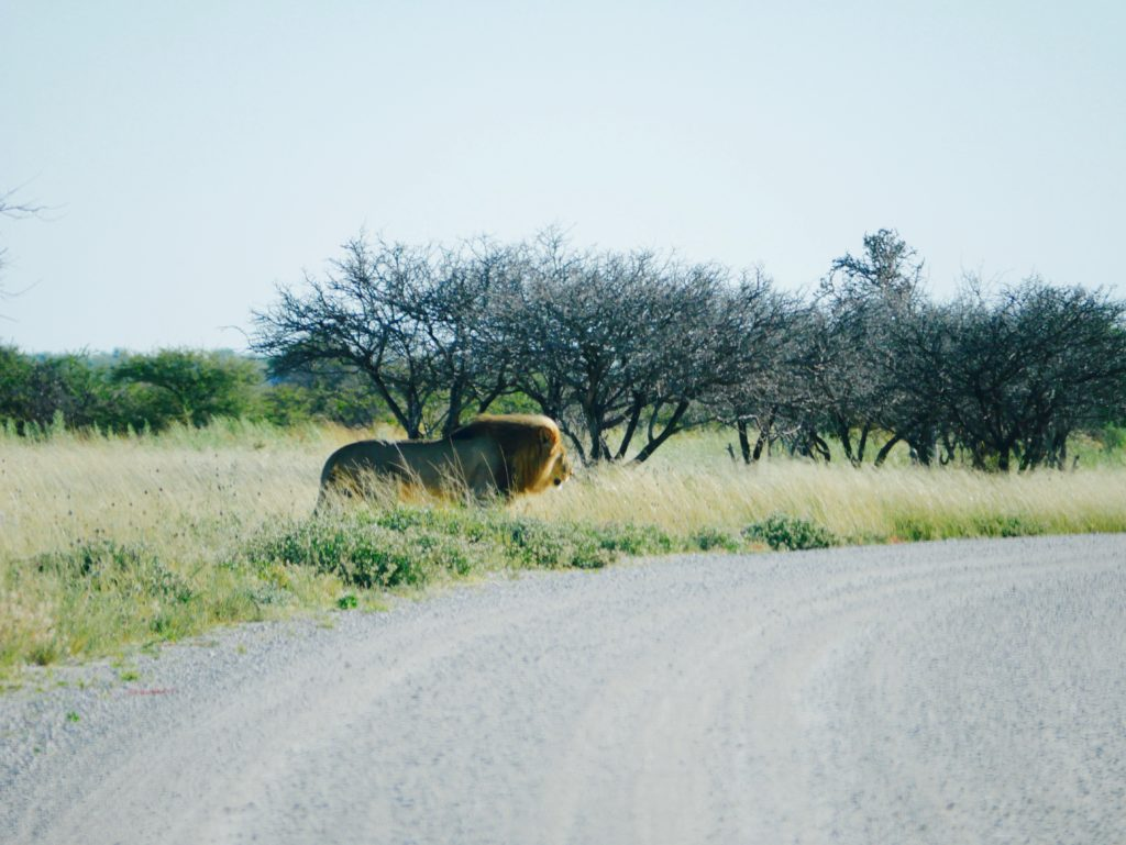 Namibia Rundreise Safari im Etosha Nationalpark