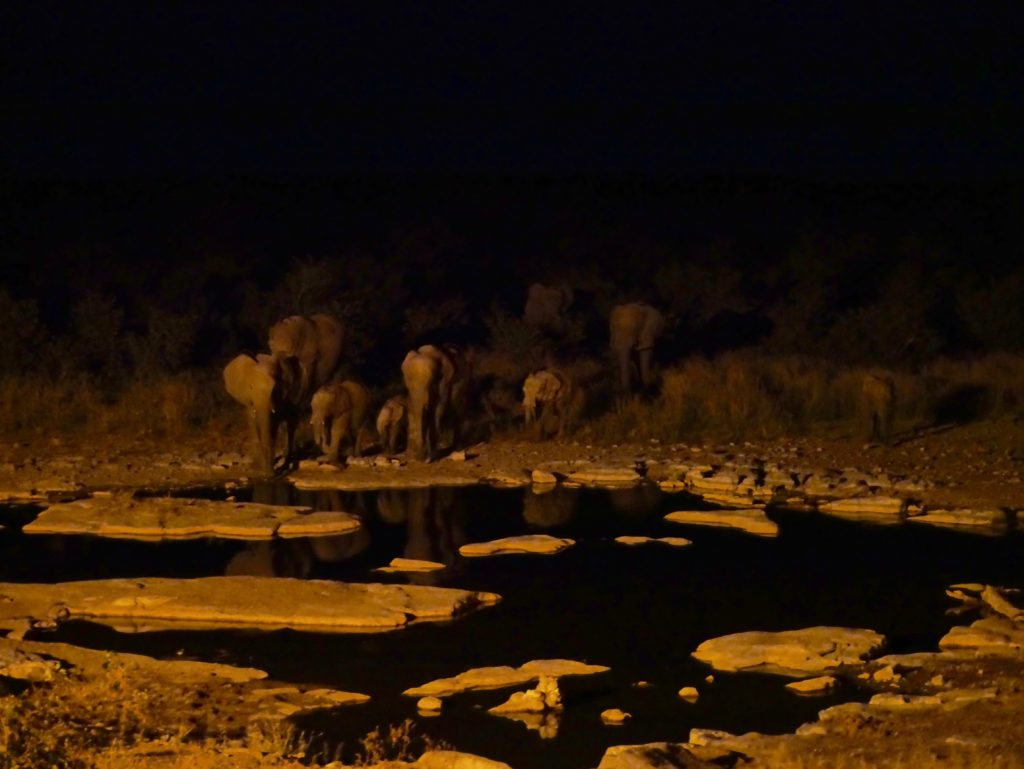 Namibia Rundreise Safari im Etosha Nationalpark Halali Camp
