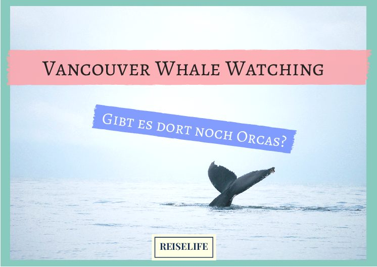 Vancouver Whale Watching – Lohnt sich das?