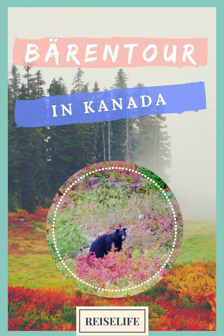 Bärenbeobachtung Kanada: Tipps für deine Bear Watching Tour in Kanada.
