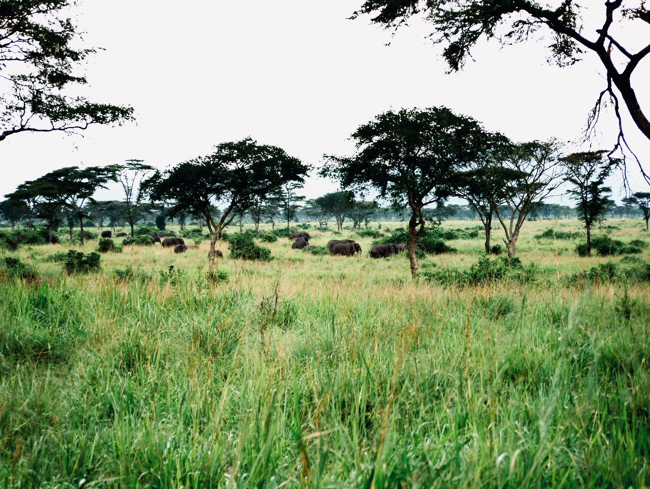 Elefanten in Uganda nahe des Queen Elizabeth Nationalparks